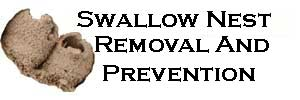 swallow nest removal and prevention